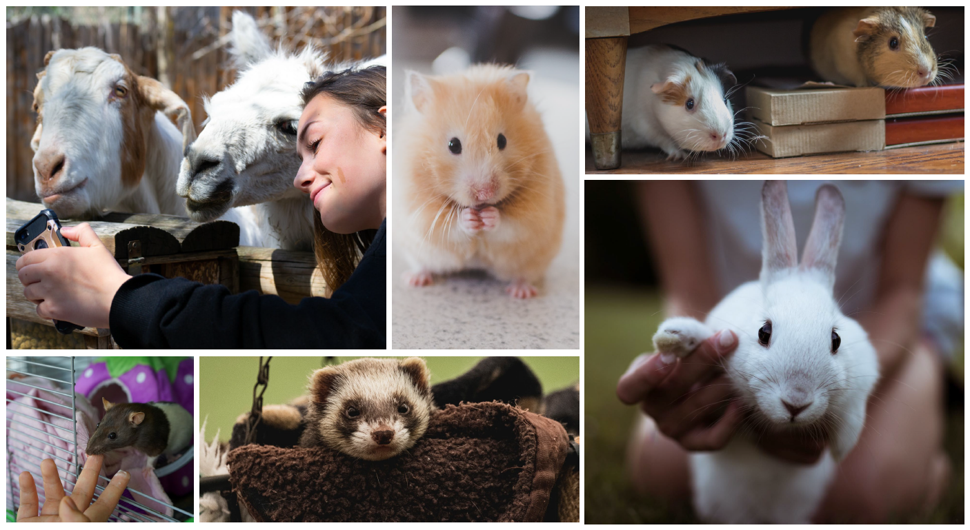 Pictures of common laboratory animals in residential settings.