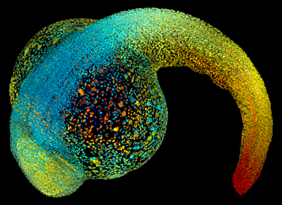 A colorful picture of a zebrafish